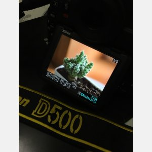 尼康半画幅连拍,D500特价出售